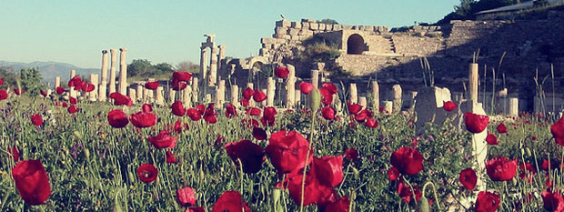 Poppies-at-Ephesus